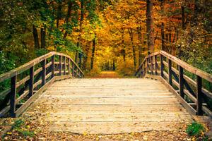Bridge In Autumn Forest Foliage Tree Landscape Nature Photo Art Print Poster 18x