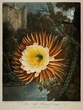 """Temple of Flora : """"The Night-Blowing Cereus"""" (1807) — Giclee Fine Art Print"""