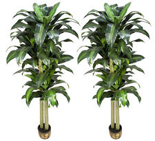 TWO Potted 6' Artificial Dracaena Trees Silk Plants 57