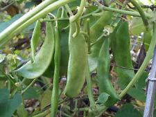 RARE Burmese Lima Beans - World's Healthiest Food! - 6 Seeds