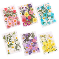 ALS_ Pressed Mixed Natural Dried Flowers DIY Art Handicraft Gift Decorations Lat
