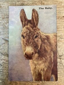 Postcard. Donkey.  The Baby.    ref880