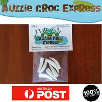 7 Authentic Australian Crocodile Teeth Medium size mixed pack