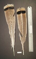 """One Pair 13""""/15"""" Penciled Golden Palm Turkey Fly Tying Tail Feathers Lot-Sf 207"""