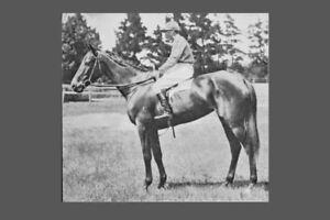ACRASIA won 1904 Melbourne Cup modern Digital Photo Postcard