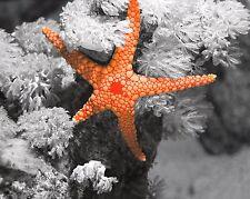 Gray Orange Home Decor Starfish Wall Art Nautical Photo Print Picture Matted