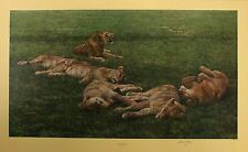 """ANTHONY GIBBS """"A Bachelor's Life"""" lions pride LE SIGNED SIZE:57cm x 90cm NEW"""