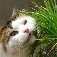 400PCS 20g Cat Grass Seeds Dog Oats Antioxidant Pets Health Food Avena Sativa AU