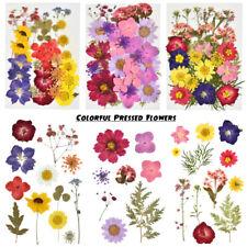 Dried Flowers Pressed Scrapbook Bookmark Card Making Diy Art Craft Decor Supply