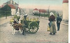 POSTCARD  DOGS  BELGIUM   Dog  cart