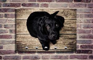Hundegarderobe Hund Leinenhalter Garderobe Hundeleine individuell Sennenhund