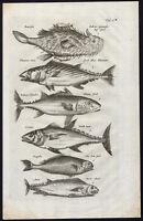 Antique Print-PILOT FISH-TUNA-Jonston-Merian-1657