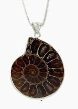 "Natural Ammonite Fossil Seashell Pendants 18"" 925 Sterling Necklace"
