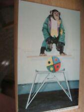 "Chimpanzee ""Oofie"" Show, St Louis Zoo Postcard"