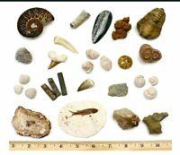 Fossil Collection Set 20 Premium Specimens Trilobite Ammonite Fish Fossil Dino
