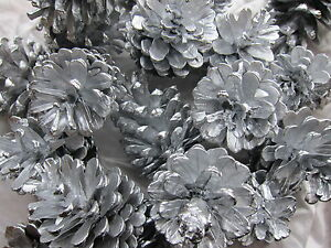 30 Silver Fir Pine Cones 4 - 7cm  Christmas Holly Ring Wreath Decoration