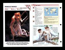 Proboscis Monkey Wildlife Fact File Mammal Animal Card Home School Study 1.84