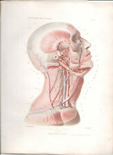 Antique Print-HUMAN ANATOMY Region of the head and neck, deep plane ANGER 1869