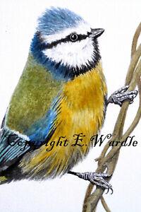 "ACEO 2.5"" X 3.5"" ' BlueTit #3' Bird CANVAS PRINT of Original Watercolour"