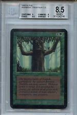 MTG Alpha Ironroot Treefolk BGS 8.5 NM/MT+ Card Magic the Gathering WOTC 2746