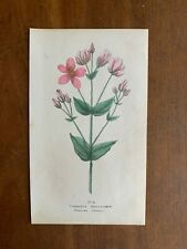 1845 three color printed lithographs of American wild flowers Literary Emporium