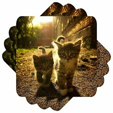 Cat Set of 4 Square Coasters Bar Table