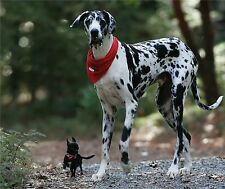 GREAT DANE AND CHIHUAHUA BEST FRIENDS    COMPUTER MOUSE PAD 9 X 7