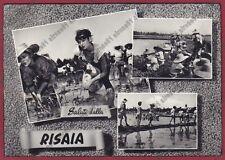 MONDINE 173 MONDARISO RISO RISAIA Elsa MARTINELLI FILM - REAL PHOTO viagg. 1958