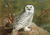 ZWPT281 100% handmade-painted landscape Owl bird on rock oil painting on canvas