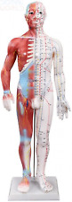 66fit Acupuncture and Muscle Male Model - 60cm, White 60 cm,