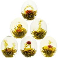 16 X Blooming Tea BlumenTee Teeblume Fortune Ball Flowering Nice New^