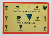Postcard Fossil Shark Teeth Found Along Beach Myrtle Beach South Carolina