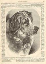 Dog, Newfoundland, Gorgeous Image, Vintage 1873 French Antique Art Print