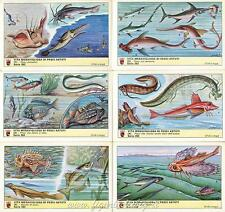 Figurine Lavazza serie n°262 Vita Meravigliosa di Pesci Astuti ANNO 1968