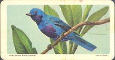 Brooke Bond (USA) - Tropical Birds - 31 - Lovely Cotinga