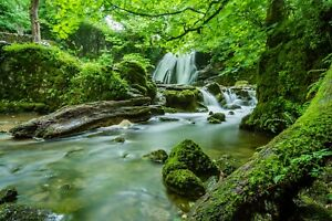 Green Forest Waterfall Trees Landscape Wall Art Poster & Canvas Picture Prints