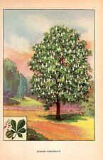 """1926 Vintage TREES """"HORSE CHESTNUT"""" GORGEOUS COLOR Art Print Lithograph"""