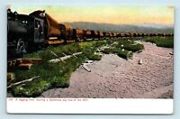 1900s CALIFORNIA LOGGING HISTORY WEIDNER POSTCARD - TRAIN HAULING BIG TREES - S3