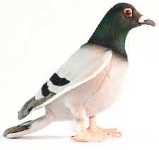 Pigeon - collectable plush realistic soft toy bird by Hansa - 29cm - 6299
