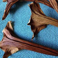 Basket Weaving 12pc Philodendron sheaths Gourds Dried pods Floral Arrangements