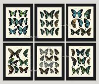 Unframed Butterfly Wall Art Print Set of 6 Antique Blue Butterflies Home Decor