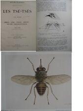 Mouche Les Tse-Tsés 1929 par E Hegh 700 pages 15 pl couleurs la réference