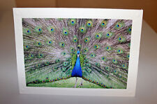 BEAUTIFUL MALE PEACOCK FINE ART GREETING CARD