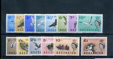 ascension 1963 birds defin set fine MNH