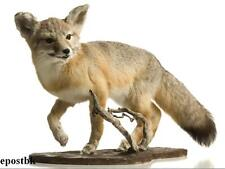 Taxidermy + Practical Taxidermy for Pleasure & Profit On Cd ROM Disc