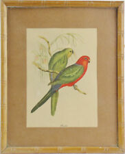 Vintage J GOULD BIRD PRINT Bamboo Style Frame Colorful PARROTS Paraketts