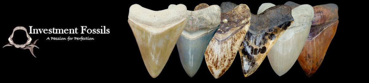 Investment Fossils