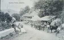 O) JAMAICA, RURAL LANDSCAPE COUNTRYSIDE-HORSES-CULTURE, GORDON TOWN POSTAL CARD