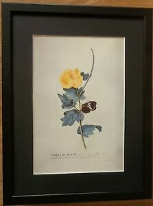Yellow Poppy by Ehret, - 12''x16'' frame, botanical wall art, Flower wall art