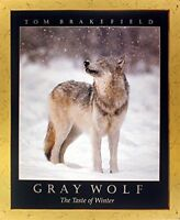 Timber Gray Wolf in Snow Wildlife Animal Wall Decor Golden Framed Art Picture